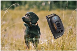 WeHunt-GPS-Dog-Tracker-II