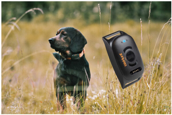 WeHunt-GPS-Dog-Tracker-II